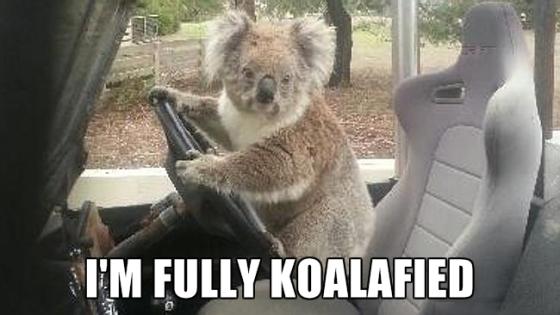 fully koalafied