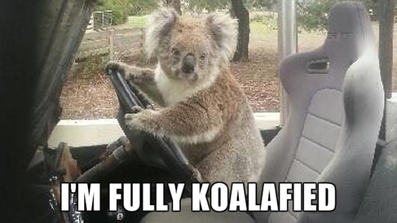 fully koalafied